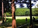 これはちょっと前の公園遊びの写真。箕面記念の森にて。穴場スポット〜。いつ行っても空いてる。駐車場あいてる。のんびりできます〜