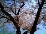 春休みと幼児英語 2009〜外大卒ママの親子英語